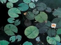 睡莲 布面油画 - 142252 - 中国油画 - 2005秋季大型艺术品拍卖会 -收藏网