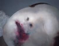 罗发辉 2004年作 面貌 布面油画 - 罗发辉 - 中国当代艺术二十年 - 2006秋季拍卖会 -收藏网