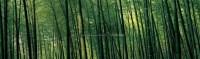 RUSSEL WONG Bamboo Forest -  - 现代及当代东南亚艺术 - 2007春季艺术品拍卖会 -中国收藏网