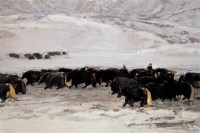 王琨 2006年 高原魂系列 布面 油画 - 王琨 - 中国油画及雕塑 - 2006秋季拍卖会 -收藏网