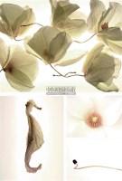 《粉色》 - 52265 - 中国油画 雕塑影像 - 2006广州冬季拍卖会 -中国收藏网