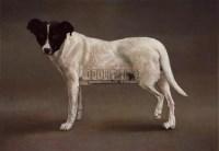 一只台湾的狗 - 叶子奇 - 华人当代艺术 - 2007春季拍卖会 -中国收藏网