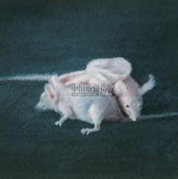 克隆鼠 布面油画 - 156672 - 中国油画 - 2005秋季大型艺术品拍卖会 -收藏网