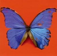 爱的眼神 蝶 豪斯霍尔德彩 画布 装框 -  - 当代美术 西洋美术 - 2011秋季伊斯特香港拍卖会 -收藏网