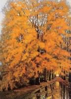 盛秋 布面 油画 - 王路 - 油画专场 - 2006年秋季拍卖会 -收藏网