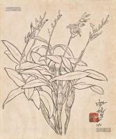 兰花 纸本 水墨 - 席德进 - 中国油画雕塑 - 2013年春季拍卖会 -收藏网