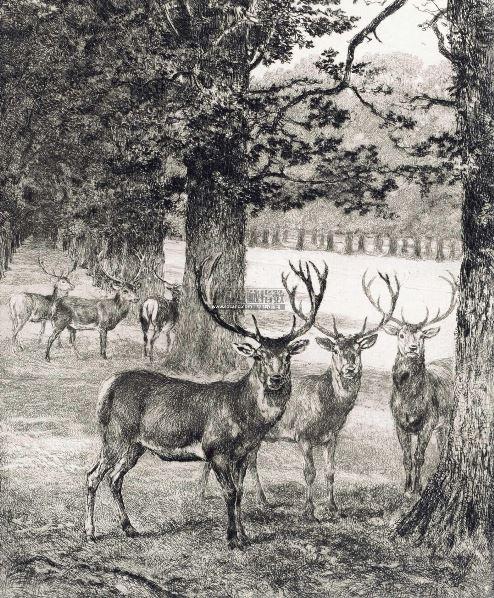 沙温堡公园内的鹿 镜片 纸本 - - 西洋古版画专场 - 2012年秋季艺术品
