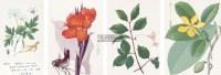 植物图考 -  - 古籍善本、故纸犹香专场 - 2012年秋季艺术品拍卖会 -收藏网