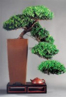 小叶罗汉 -  - 杂项专场(二) - 长物江南—2012年艺术品拍卖会 -收藏网