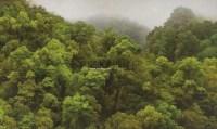 山在花莲·荖溪·时雨 卵彩 油画 亚麻布 - 叶子奇 - 亚洲现代与当代艺术 - 台北2012秋季拍卖会 -收藏网