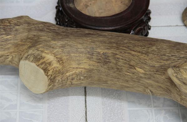 [香缘木艺]海南风水树 收藏镇宅沉香木摆件
