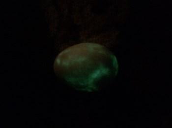 天然夜明珠-收藏网